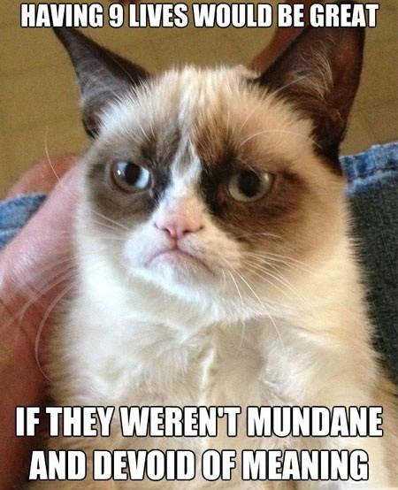 angry cat depressed Sad yolo - 6621376768