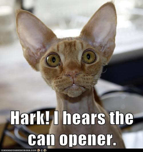 hark,ears,listen,captions,hear,Cats,can opener
