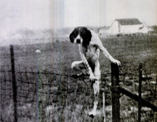 black and white creepy dogs vintage photography - 6621805312