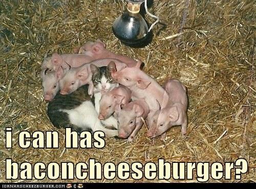 Cheezburger Image 6621843712