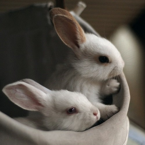 Babies,Bunday,bunny,happy bunday,rabbit,whiskers
