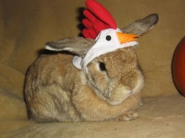 bunny,cadbury eggs,chicken,costume,happy bunday,rabbit