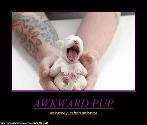 AWKWARD PUP awkward pup be's awkward