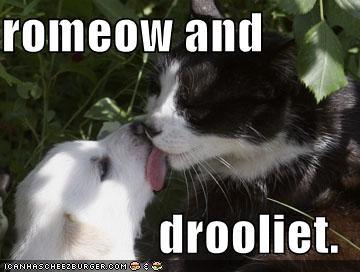 kissing labrador lolcats love romance - 662228736