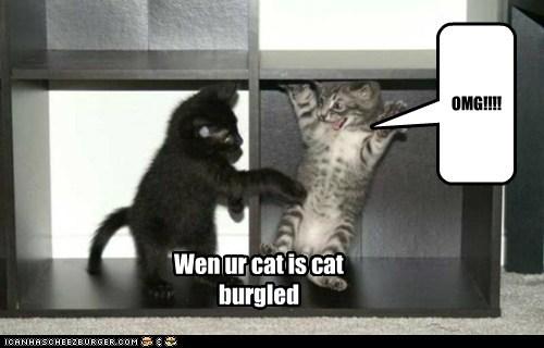 OMG!!!! Wen ur cat is cat burgled