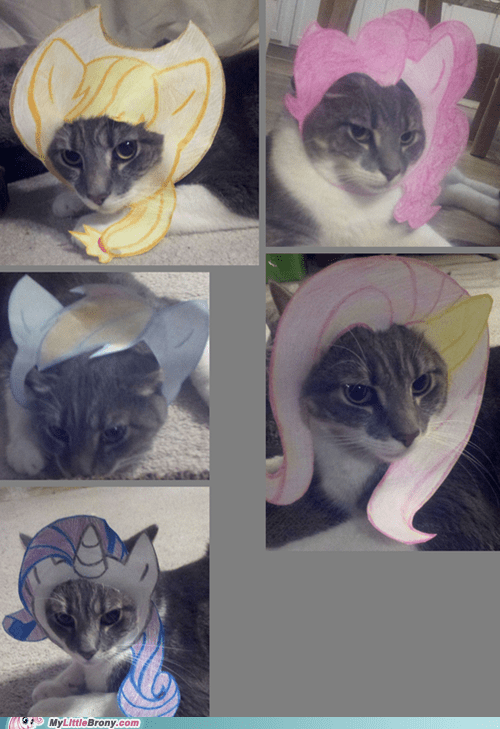 animals Bronies Cats IRL wheres-twilight-sparkle - 6622430720