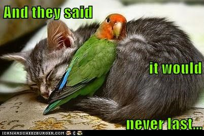 cat,parrot,never,last,relationship,hug,They Said