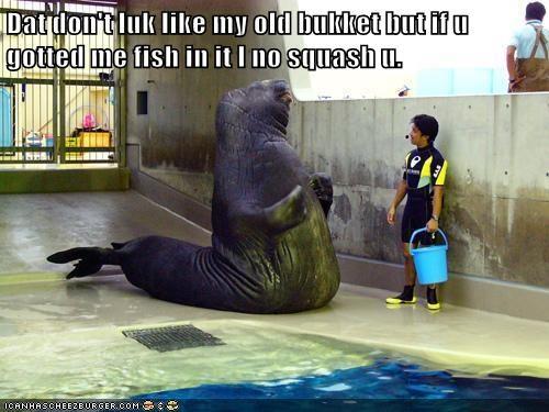 walrus lolrus bukkit bucket fish nice squash - 6623443200