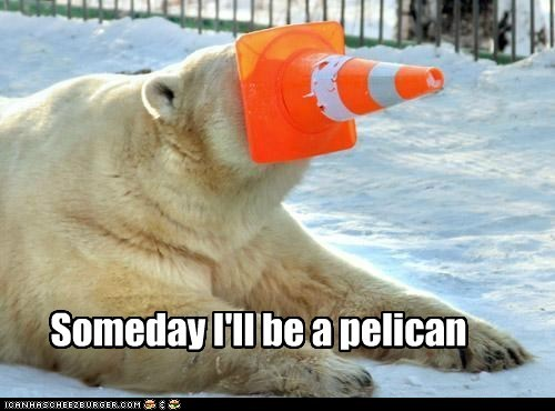 pelican,traffic cone,Someday,polar bear,waiting,dreams