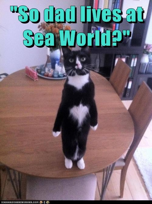 interspecies,sea world,captions,dad,parent,Cats,penguin