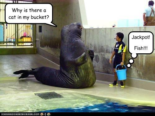 walrus lolrus jackpot fish cat bukkit bucket lolcat - 6623913472