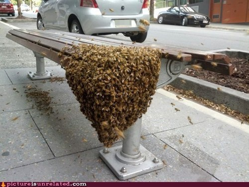 bees seat bus stop street - 6624041728