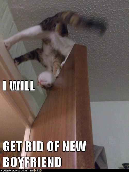 boyfriend hurt door balance captions destroy get rid of kill Cats - 6624123904