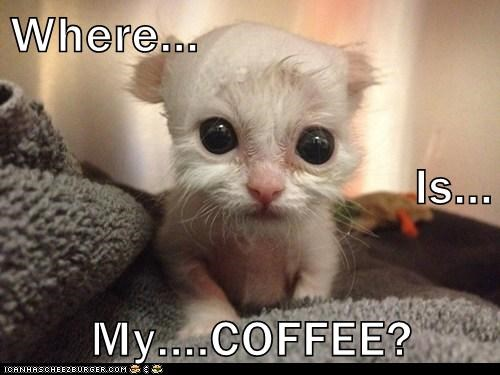Image result for where's my coffee? images