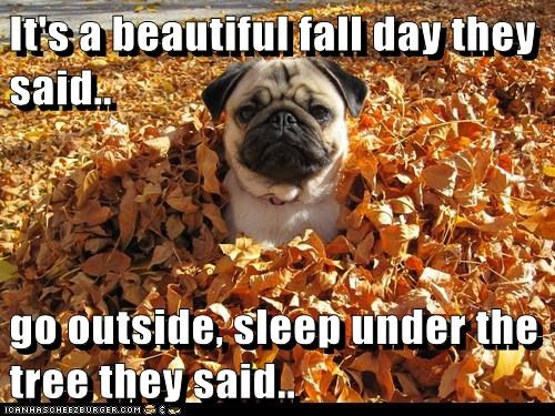 autumn dogs pile of leaves pug leaves season fall They Said