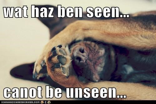 dogs what has been seen cannot be unseen what breed - 6624573952