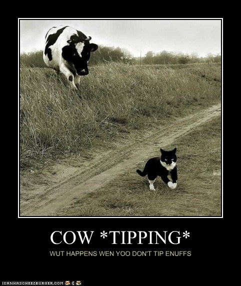 cow,cat,chasing,cow tipping,what happens