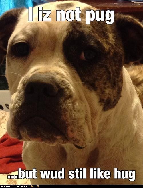 want pitbull hugs sad dog - 6624719872
