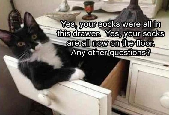 pets socks funny memes Memes animal memes animals - 6624773