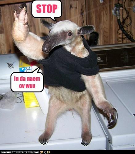 Cheezburger Image 6624963328