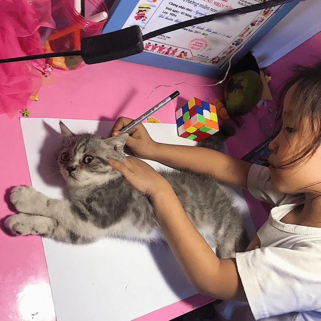 Memes girls labeling tracing object Cats - 6625029