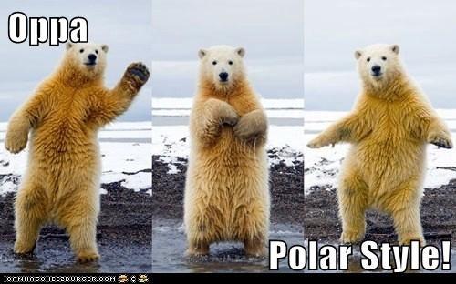 polar bear,oppan gangnam style,dancing