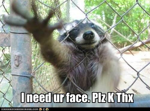 raccoon,face,kthx,reaching,fence,come closer