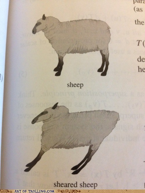 shear,sheep,truancy story,textbook