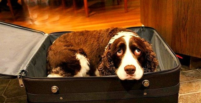 dogs hospital dying wife husband suitcase sneaks - 6625541