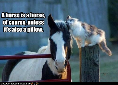 horse cat Pillow sleeping giddy up - 6625597440
