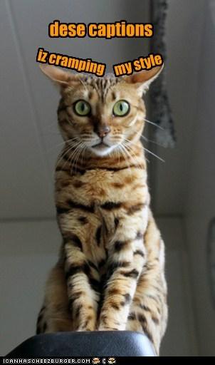 cramp captions meta lolspeak style Cats - 6625633792