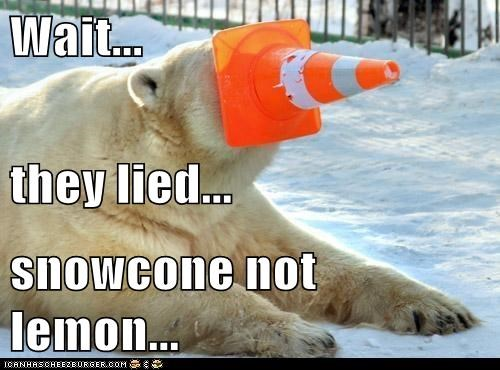 traffic cone,gross,polar bear,lied,snowcone,lemon