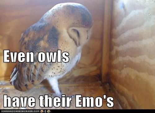 Sad depressed emo Owl - 6625830144