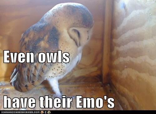 Sad depressed emo Owl - 6625830144