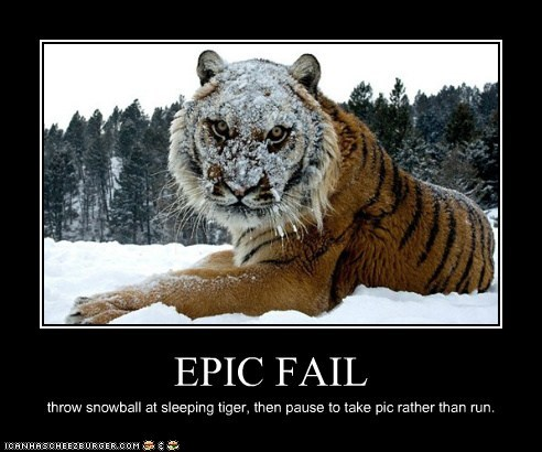 tiger FAIL sleeping snowball picture priorities run