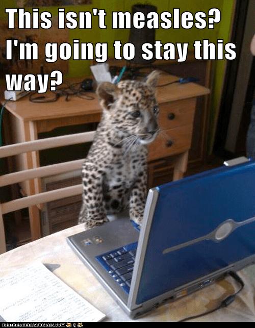 leopard cub cheetah internet stay forever - 6625998080