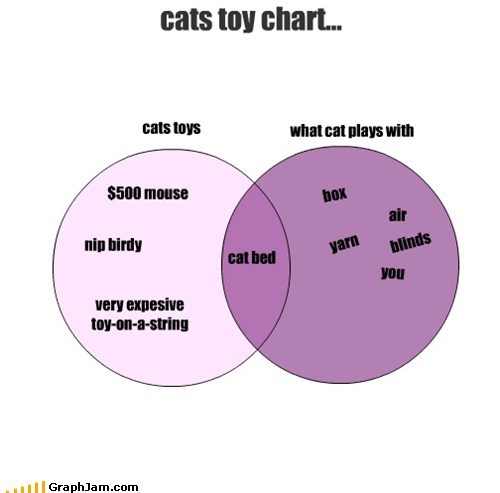 cats toy chart...
