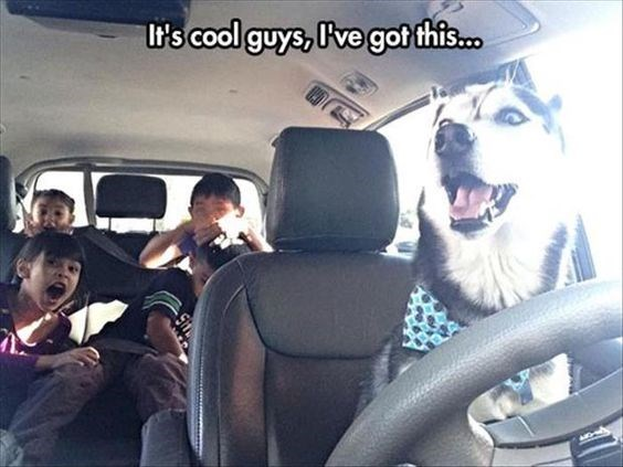 Funny dog memes - dog memes of a dog driving a car and kids screaming in the background