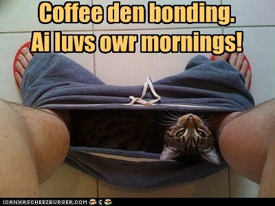 bonding,captions,Cats,coffee,morning,roommate,toilet
