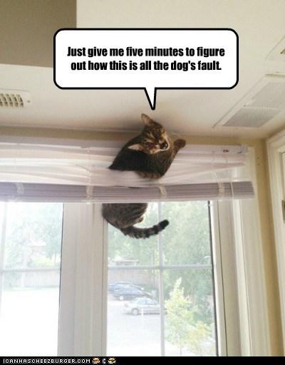 fault stuck captions blame Cats window - 6626780416