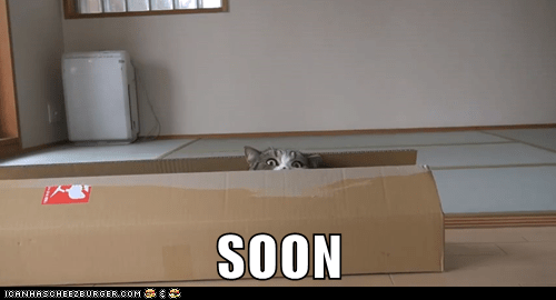 box captions Cats creepy SOON