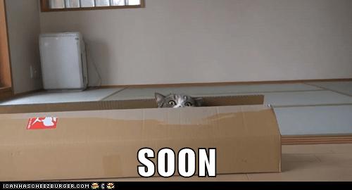 box captions Cats creepy SOON - 6627157248