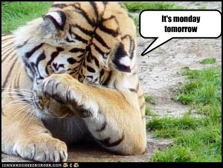 Sad facepalm tiger tomorrow monday - 6627236608