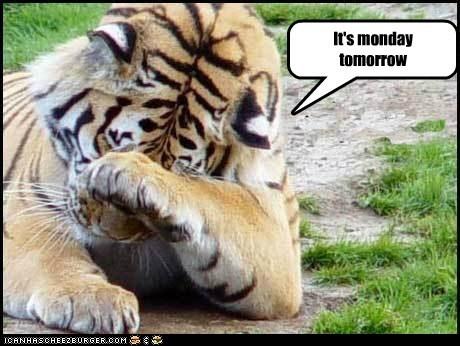 Sad facepalm tiger tomorrow monday - 6627236608