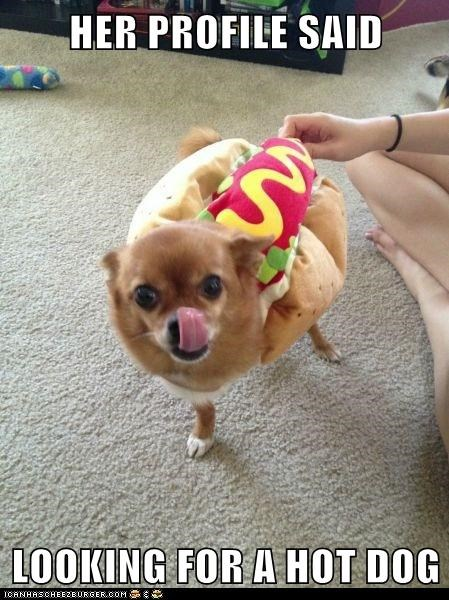 hotdog costume dogs chihuahua online dating - 6627273472