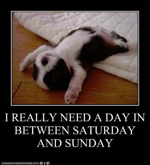 demotivatonal dogs good idea puppy tired weekend - 6627303424
