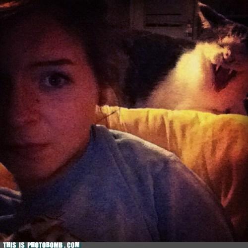 animal cat scary vampire