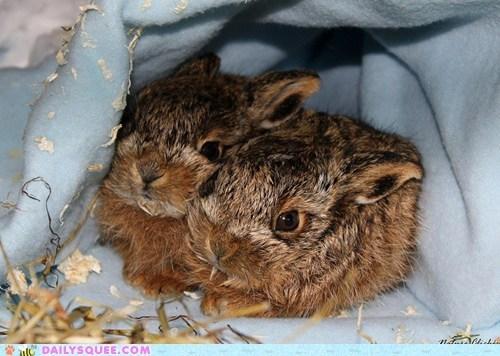 happy bunday bunny rabbit Babies - 6627543040