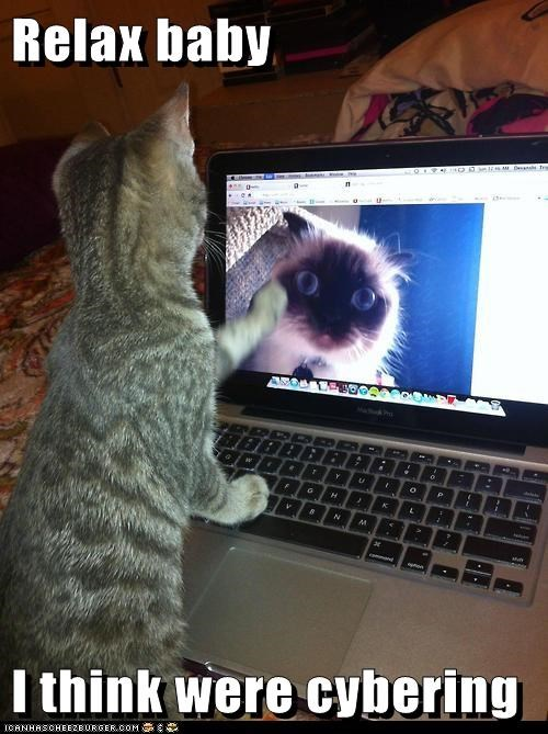 camgirl captions Cats cyber sexytimes cybering laptop - 6627674880