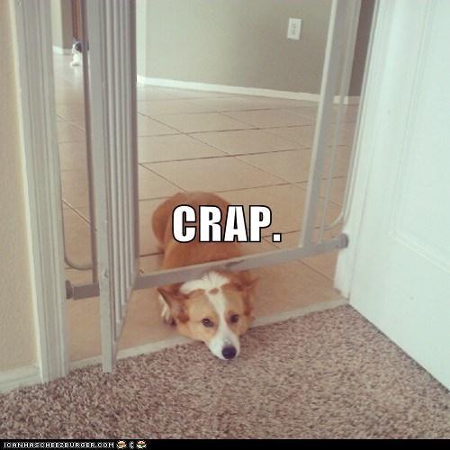 doggie door stuck corgi - 6627775744
